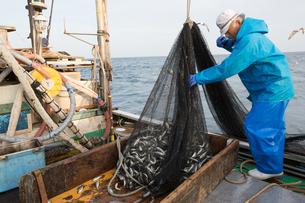 定置網漁の男性の写真素材 [FYI02684496]
