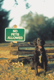 Dog beside No Pets Allowed signの写真素材 [FYI02685254]