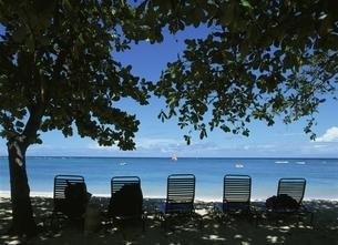 海岸のいすと木の写真素材 [FYI02685697]