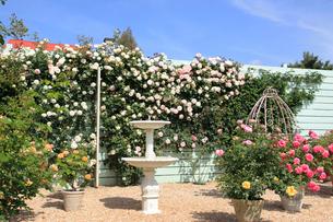 バラの咲く噴水のある庭の写真素材 [FYI02685896]