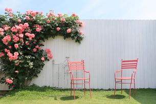 バラのある美しいガーデンの写真素材 [FYI02685912]