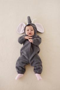 ゾウの着ぐるみを着た赤ちゃんの写真素材 [FYI02685914]