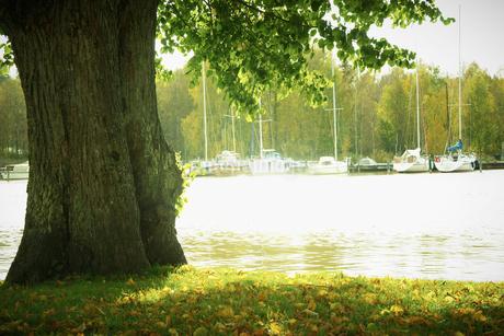 川辺の木の写真素材 [FYI02686927]