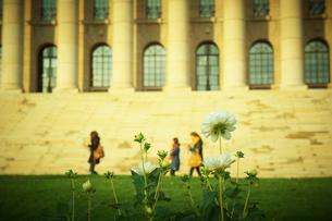 国会議事堂前 フィンランドの写真素材 [FYI02686961]