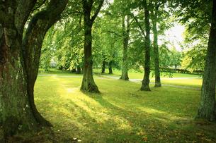 公園の写真素材 [FYI02686980]