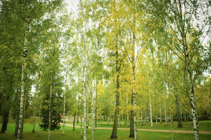 秋のシベリウス公園 フィンランドの写真素材 [FYI02687410]