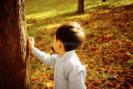 木の幹に触れる男の子の写真素材 [FYI02687672]