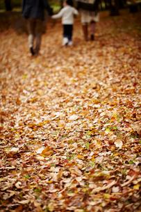 落ち葉の上を歩くファミリーの後姿の写真素材 [FYI02687749]