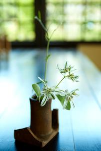 和のインテリア 花器に生けた花の写真素材 [FYI02687767]