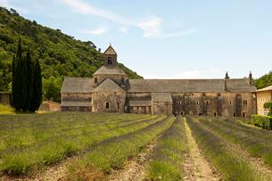 ノートルダム・ド・セナンク修道院 ヴォクリューズ・ゴルド フランスの写真素材 [FYI02688186]