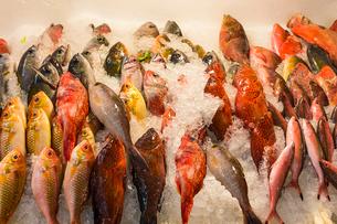 水揚げされた新鮮な魚の写真素材 [FYI02688494]