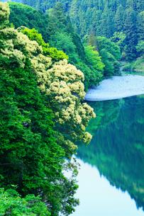 大渡ダム湖と新緑の写真素材 [FYI02688694]