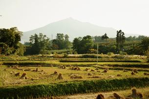 岩木山と田園 青森県の写真素材 [FYI02688740]
