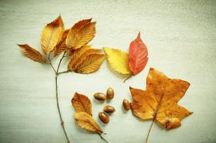 紅葉とドングリの写真素材 [FYI02688868]