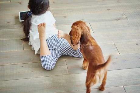 寝転ぶ女の子とカニンヘンダックスフンドの写真素材 [FYI02688883]
