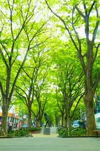 定禅寺通り グレコ像 宮城県 の写真素材 [FYI02688889]