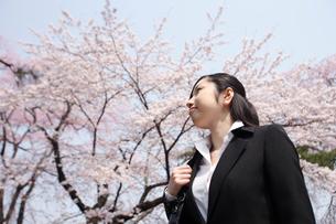 新入社員女性と桜の写真素材 [FYI02689022]