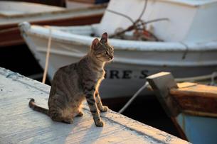 チャナッカレ港の野良猫の写真素材 [FYI02689183]