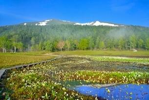 ミズバショウ咲く新緑の尾瀬ヶ原と至仏山に朝霧の写真素材 [FYI02689242]
