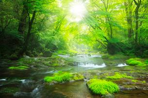 菊池渓谷 広河原の光芒の写真素材 [FYI02689256]