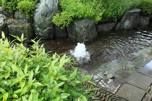 うちぬきの湧水の写真素材 [FYI02689294]