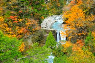 紅葉の黒部峡谷 祖母谷川の写真素材 [FYI02689334]