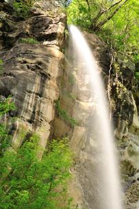 新緑の八坂大滝の写真素材 [FYI02689424]