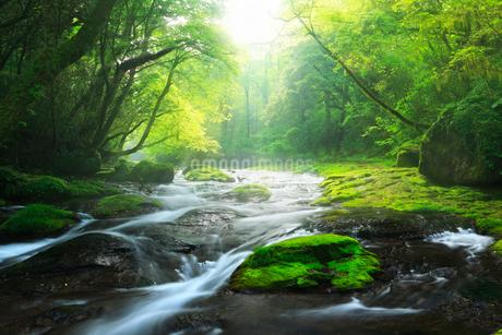 菊池渓谷 広河原の光芒の写真素材 [FYI02689425]