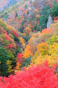 林道湯沢線の紅葉の写真素材 [FYI02689523]