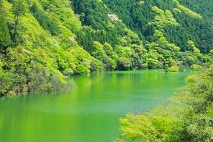 新緑の紀の川の写真素材 [FYI02689529]