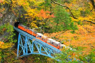 紅葉の黒部峡谷 トロッコ電車と後曳橋の写真素材 [FYI02689789]
