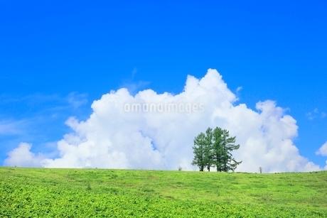 富良野 嵐の木と入道雲の写真素材 [FYI02689937]
