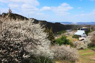 栃本梅林と山間集落の写真素材 [FYI02690062]