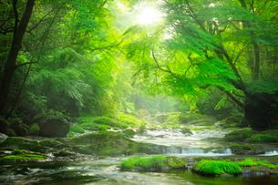 菊池渓谷 広河原の光芒の写真素材 [FYI02690202]