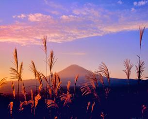 長尾峠ふきんのススキと富士山の写真素材 [FYI02690679]