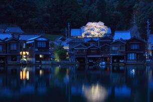 伊根の舟屋と海蔵寺のサクラ ライトアップ夜景の写真素材 [FYI02690738]