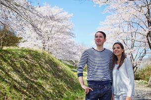 桜を眺める外国人カップルの写真素材 [FYI02690822]