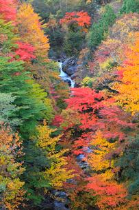 林道湯沢線 エンマ橋より望む紅葉の写真素材 [FYI02690891]