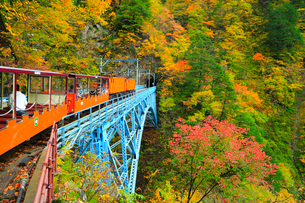 紅葉の黒部峡谷 トロッコ電車と後曳橋の写真素材 [FYI02691075]