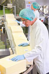 Quality control worker checking label on cheese block at production line in processing plantの写真素材 [FYI02692001]