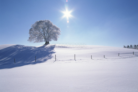Silhouette of glazed frost on a tree, Upper Bavaria, Germanyの写真素材 [FYI02692026]