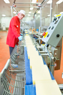 Quality control worker checking cheese on production line in processing plantの写真素材 [FYI02692068]