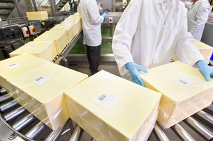 Worker handling large blocks of cheese at production line in processing plantの写真素材 [FYI02692077]