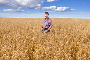 Farmer Inspecting Oat Crop In Fieldの写真素材 [FYI02692168]