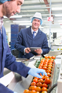 Portrait confident quality control worker with digital tablet inspecting ripe red tomatoes on producの写真素材 [FYI02692194]