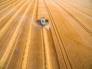 Aerial view of farmer walking toward combine harvester in golden barley fieldの写真素材 [FYI02692235]
