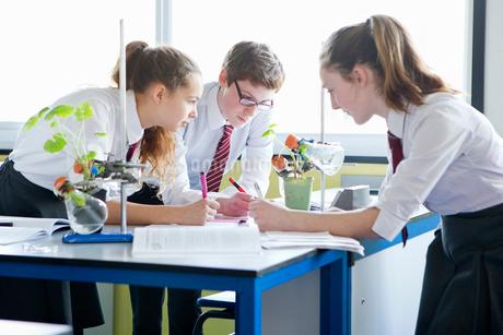 High school students conducting scientific experiment in biology classの写真素材 [FYI02693032]