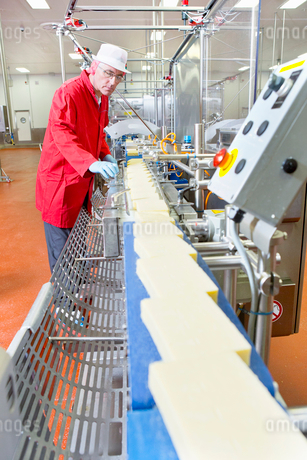 Quality control worker checking cheese on production line in processing plantの写真素材 [FYI02693260]
