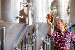 Male Brewery Worker Quality Checking Beer Sampleの写真素材 [FYI02693351]