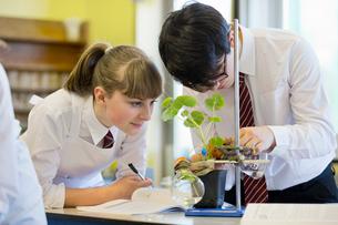 High school students conducting scientific experiment in biology classの写真素材 [FYI02693548]